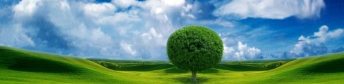 cropped-Beautiful-Sky-Tree