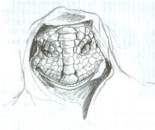 DracoReptilianHooded1