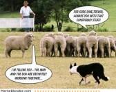 Conspiracy-Theory-Sheep