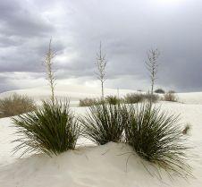 Richard Smith 648px-White_Sands_New_Mexico