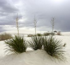 Richard Smith 648px-White_Sands_New_Mexico