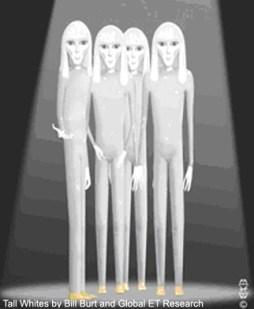 Tall White Reptilian Aliens Tall-Whites-Bill-Burt-Global-ET-Research