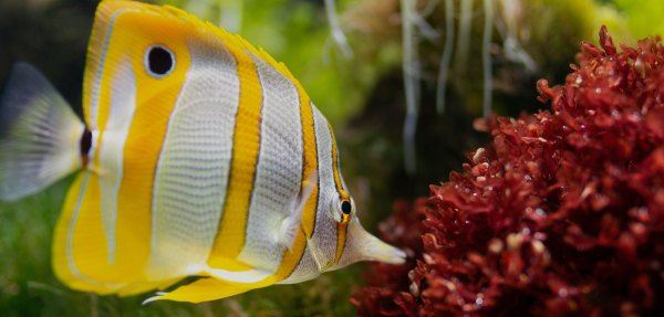 Exotic Freshwater Fish Store - Year of Clean Water
