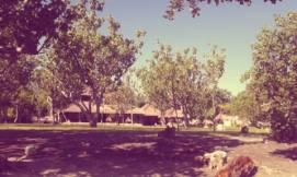Villas in anderen Seiten vom Resort.