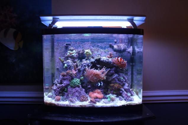 An Indepth Review of Coralife Biocube Aquarium