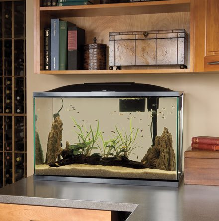Best 55 Gallon Fish Tanks Of 2016 Expert Round Up