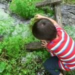 水草と子ども