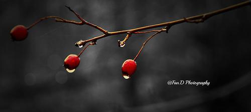 photo credit: ....Beautiful.... via photopin (license)