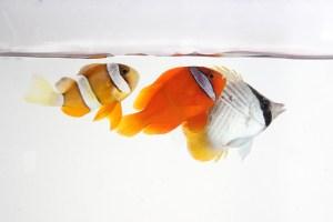 熱帯魚 s