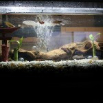 photo credit: 20 Gallon Aquarium Overall via photopin (license)