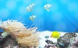 水槽の藻の種類:それぞれの原因と予防・対策法は?