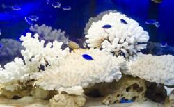 アクアリウムとは?水槽の立ち上げ方やレイアウトの考え方は?飼育できる魚の種類は?