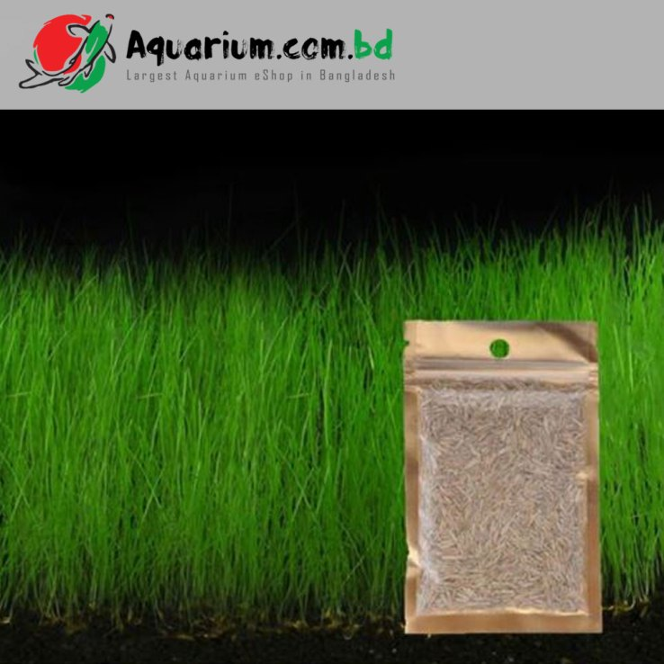 Aquarium Plant Seed