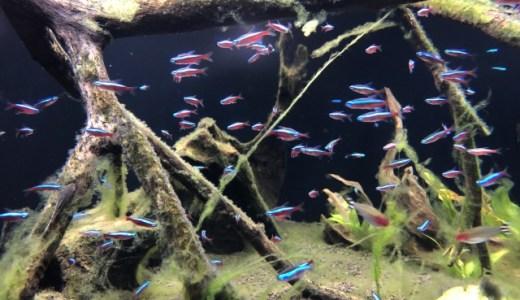飼育が簡単な熱帯魚7選!アクアリウムを始めるならこの魚から!