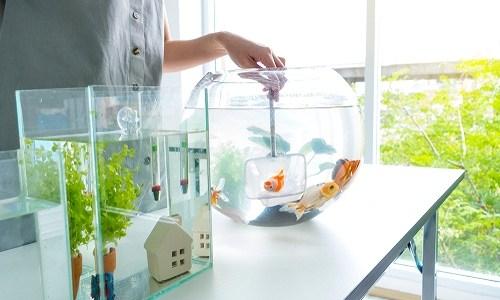 熱帯魚を引っ越しさせる方法とは!パッキングと水温管理が重要