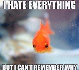 http://imglulz.com/wp-content/uploads//2013/01/MEME-Grumpy-Fish.jpg