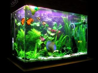 http://www.wormsandgermsblog.com/files/2011/06/Fish-Tank1.jpg