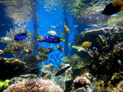 http://upload.wikimedia.org/wikipedia/commons/7/7f/Fish_tank_(2).jpg