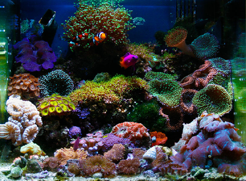 Awesome Aquariums