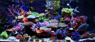 http://reefkeeping.com/joomla/images/stories/totm/Dec12/FTSlg.jpg