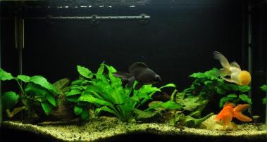 http://www.aquarium-keeper.com/wp-content/uploads/2011/11/gold-fish-tank.jpg