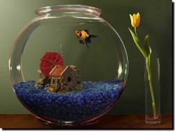 http://screenshots.en.sftcdn.net/en/scrn/29000/29353/goldfish-aquarium-17.jpg