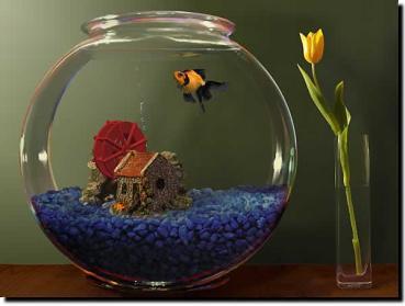 http://screenshots.en.sftcdn.net/en/scrn/29000/29353/goldfish-aquarium-17.jpg