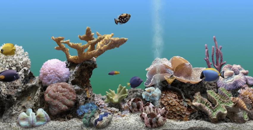 benefits of fish tank