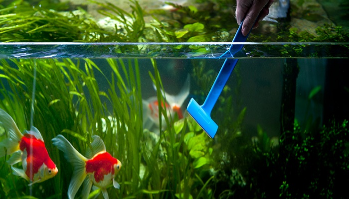 Be a Responsible Fish Keeper For Your Home Aquarium