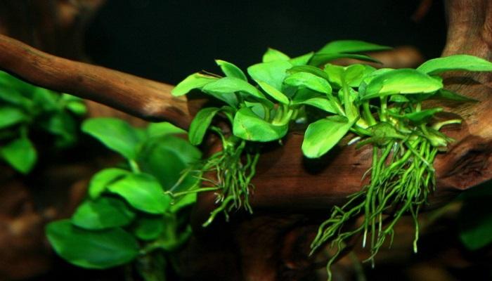 6 Best Freshwater Aquatic Plants for Freshwater Aquarium