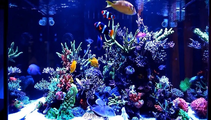 10 Step by Step Making an aquarium in your home