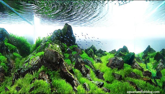 Best Freshwater Aquarium Plants Guide for Beginners