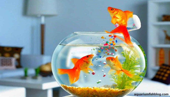 6 facts why your aquarium fish does not eat-You know that?