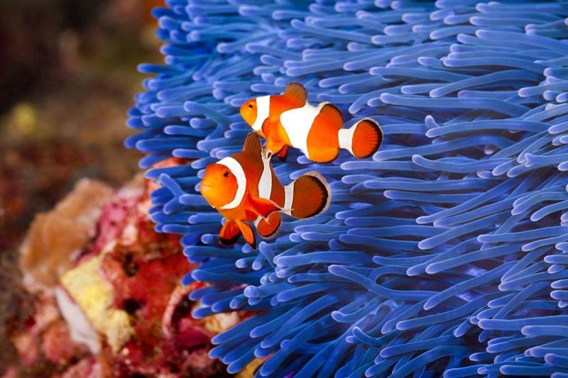 Top 10 most beautiful aquarium fish in the world