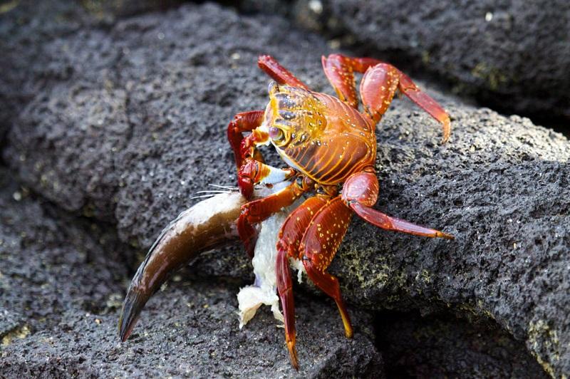crabs eat