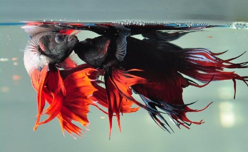 fish reproduce