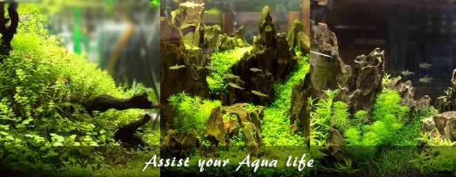 Assist your Aqua life