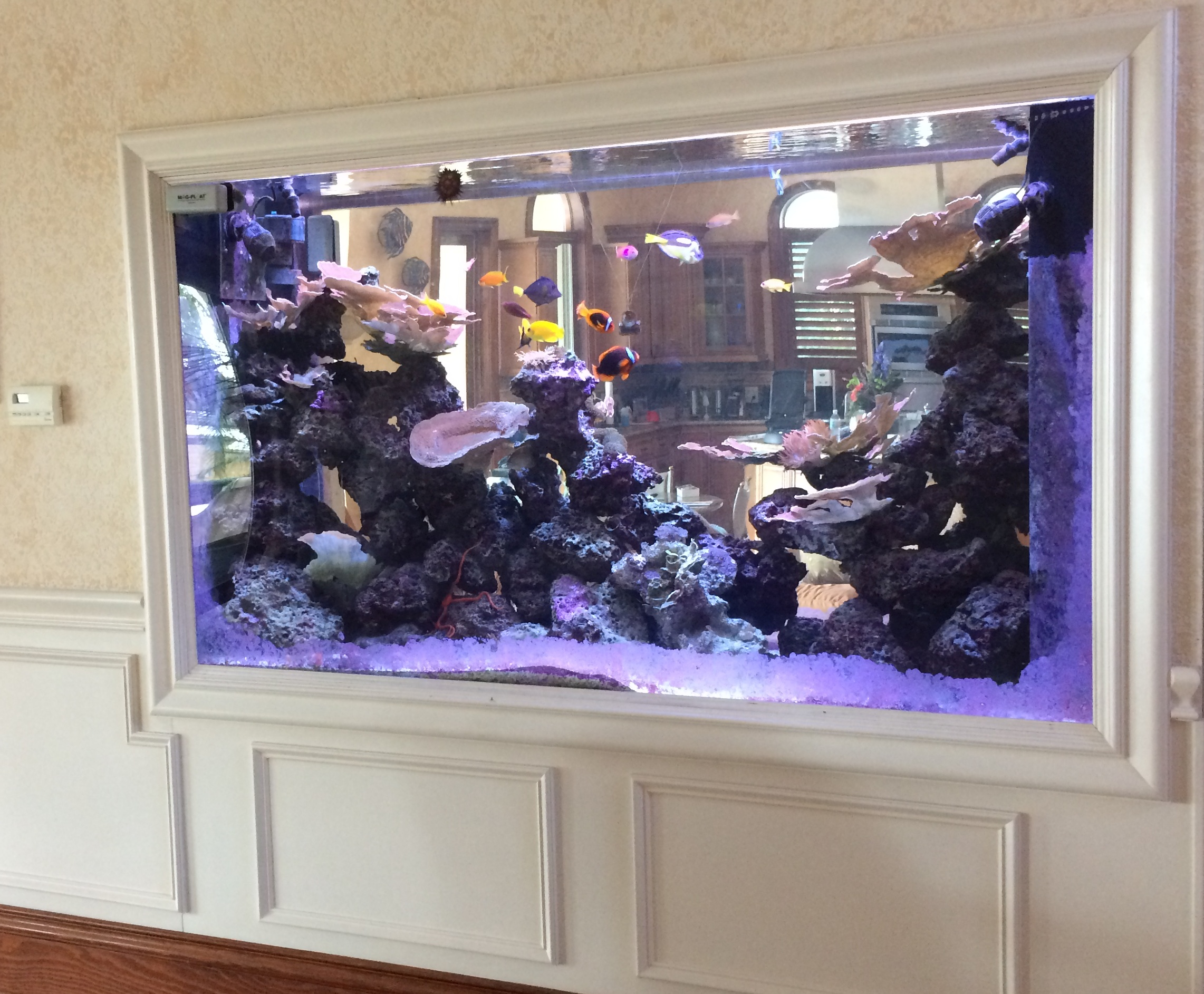 Custom Freshwater And Marine Tanks For Your Home And Office.
