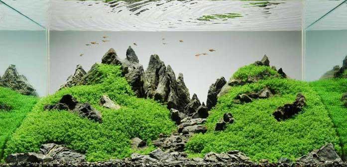 Cara Membuat Aquascape | my aquarium
