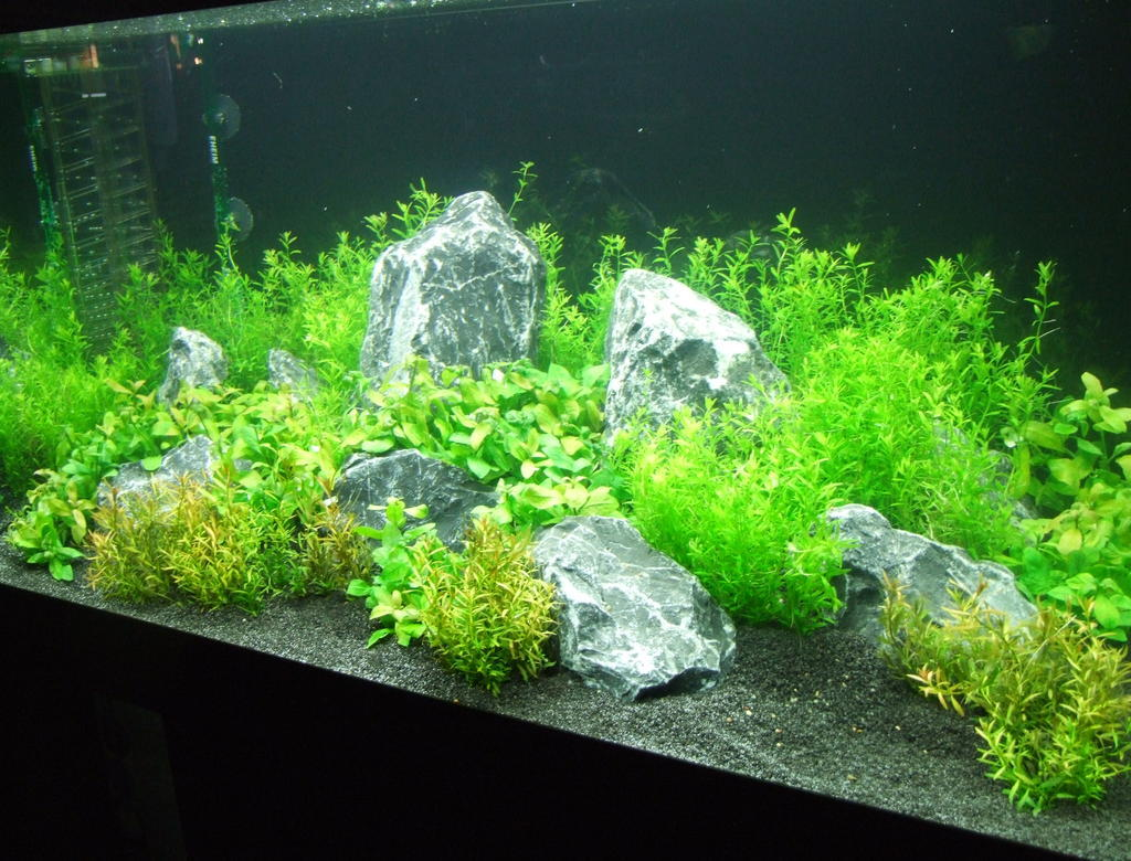 einrichtung aquarium 30 l nano after 6 weeks aquascaping aquarium nano aquarium. Black Bedroom Furniture Sets. Home Design Ideas