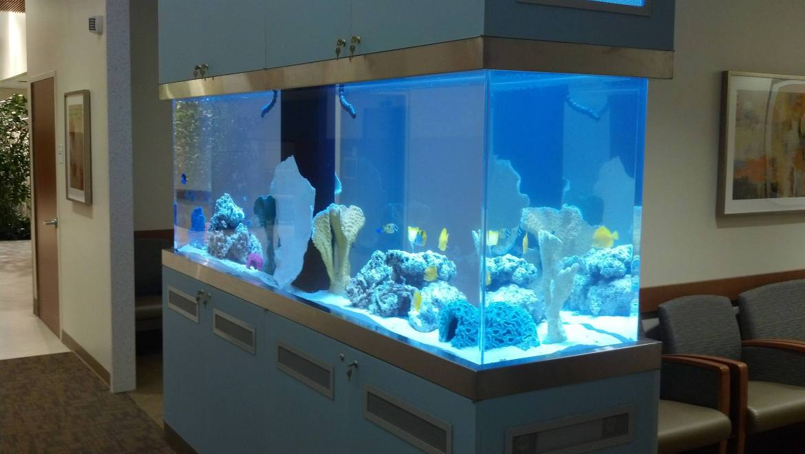 Hospital aquarium