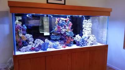 450 gallon aquarium