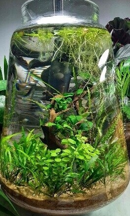 aquarium vaas