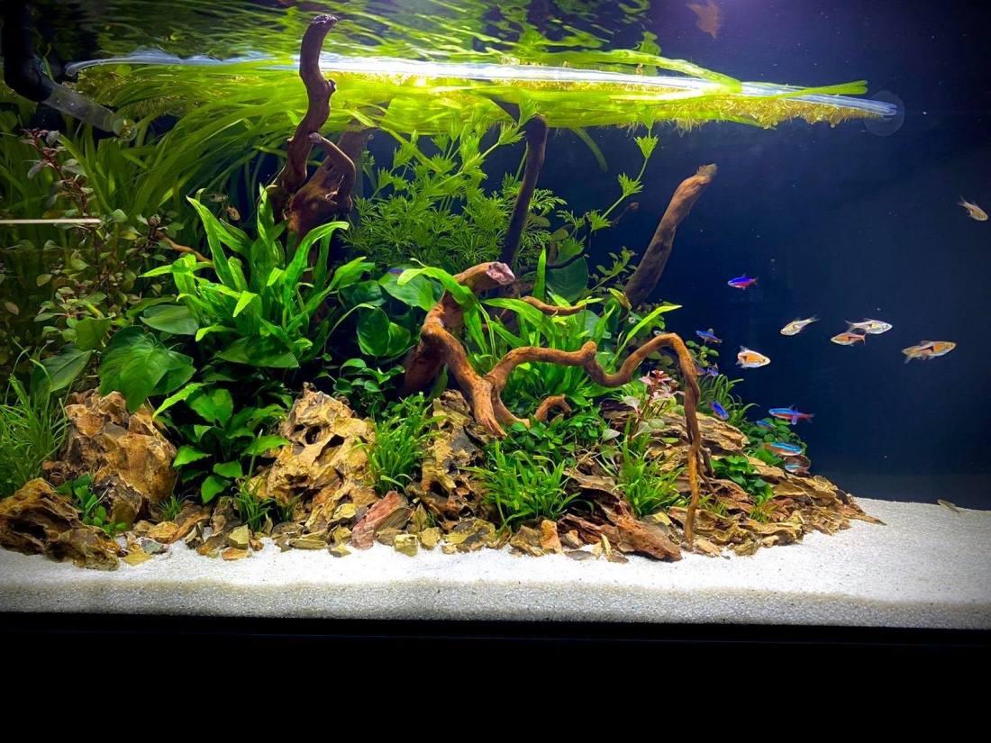 aquarium voorbeelden