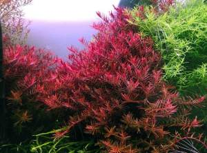 aquarium voedingsbodem