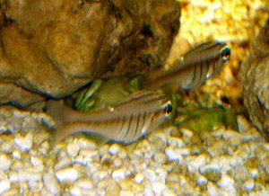 Tropical Fish 14
