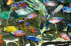 Tropical Fish 26