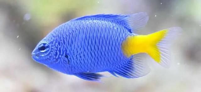 Different Saltwater Aquarium Types