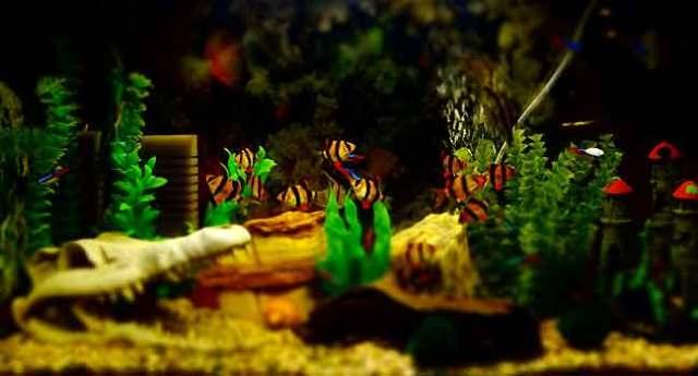 Efficient Care Requirements for Aquarium Fish