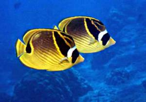 Saltwater fish are generally larger and more expensive than freshwater stock